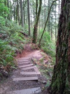 P.B. Trail 7