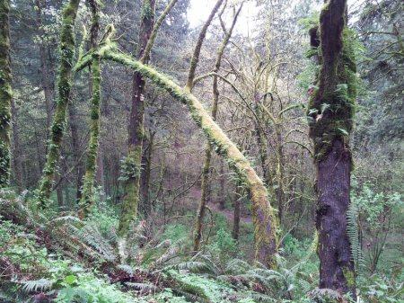 P.B-woods 1