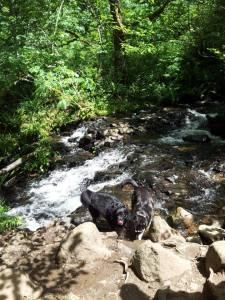Dogs & River- Gorge