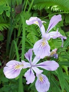 Gorge- Flower 2