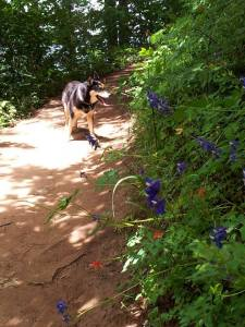 Gorge- Flower & Dog